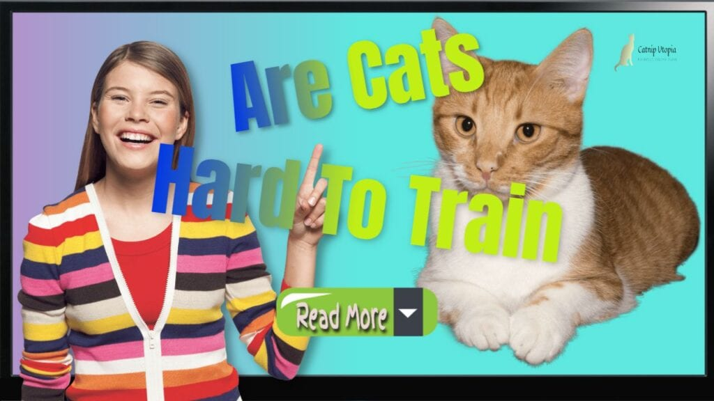 How to Become an Expert at Training Cats